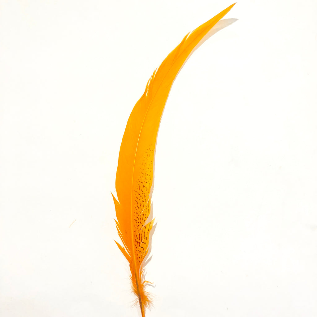 "20"" to 30"" Silver Pheasant Tail Feather - Orange"