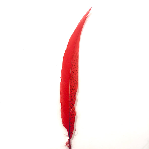 "20"" to 30"" Silver Pheasant Tail Feather - Red"