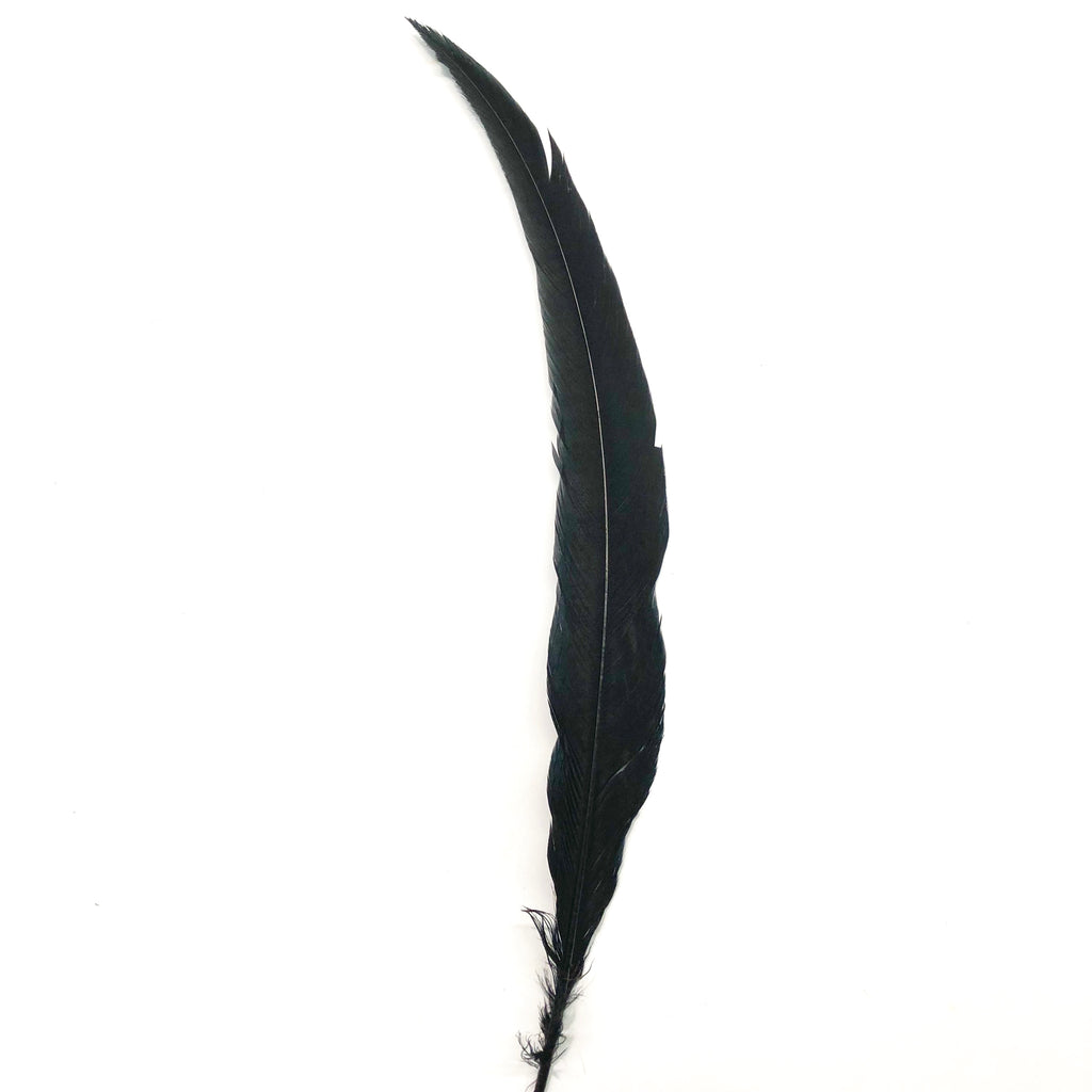 "20"" To 30"" Silver Pheasant Tail Feather - Black ((SECONDS))"