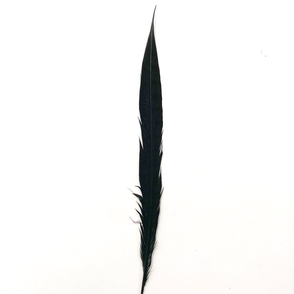 "20"" to 30"" Lady Amherst Pheasant Side Tail Feather - Black ((SECONDS))"