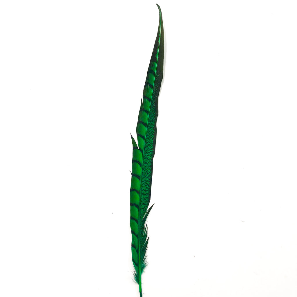 "20"" to 30"" Lady Amherst Pheasant Side Tail Feather - Green ((SECONDS))"