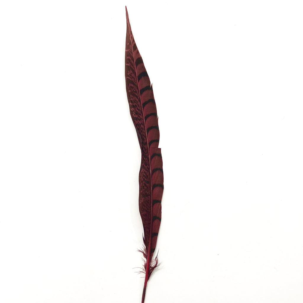 "10"" to 20"" Lady Amherst Pheasant Side Tail Feather - Burgundy ((SECONDS))"