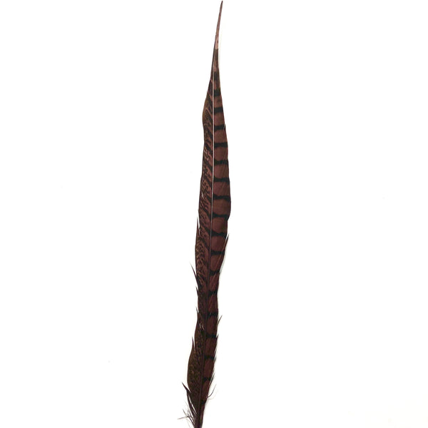 "10"" to 20"" Lady Amherst Pheasant Side Tail Feather - Chocolate Brown"