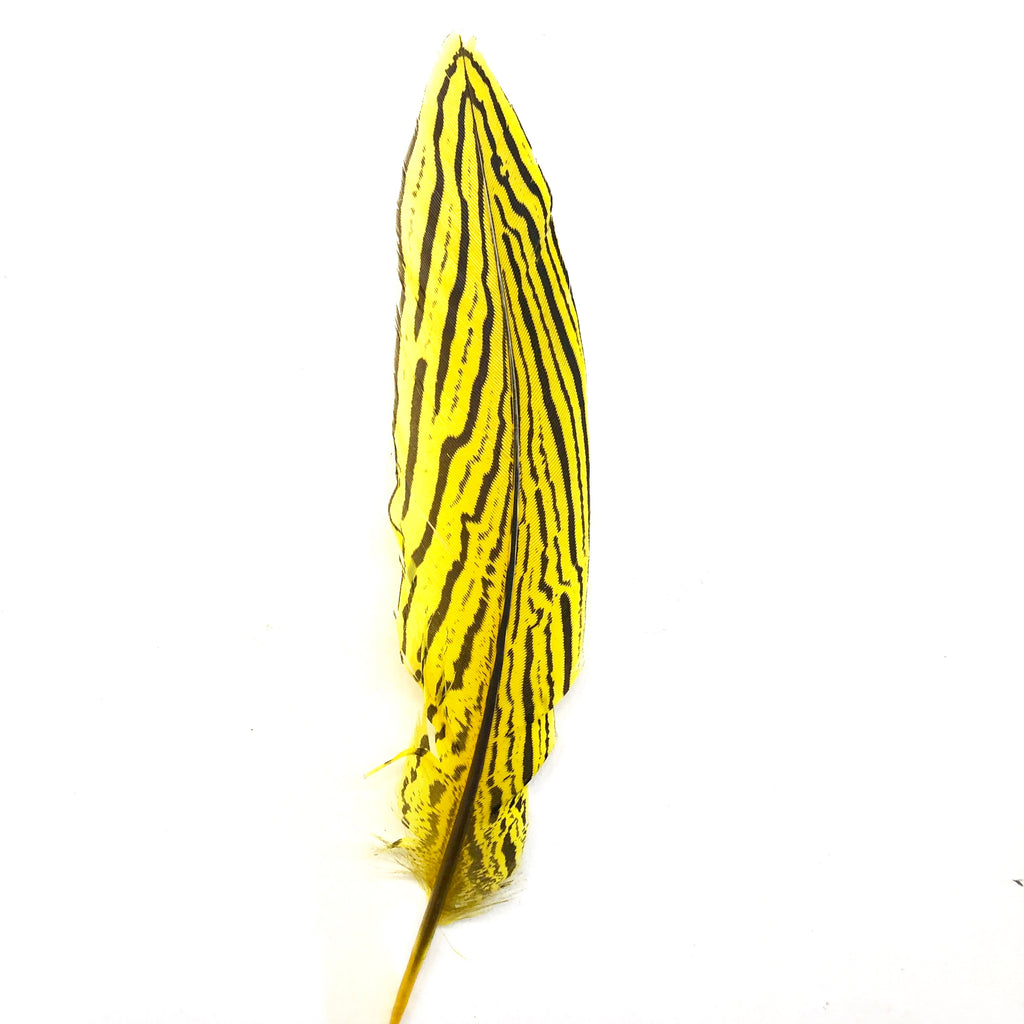 "6"" to 10"" Silver Pheasant Tail Feather - Yellow"
