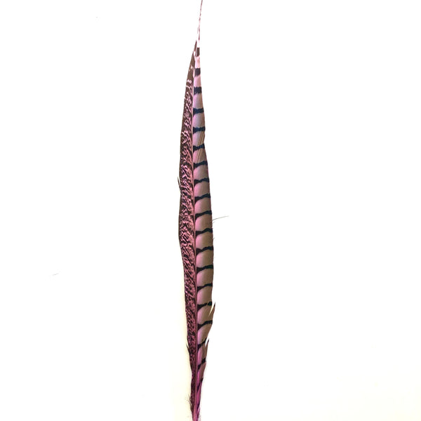 "10"" to 20"" Lady Amherst Pheasant Side Tail Feather - Pink ((SECONDS))"