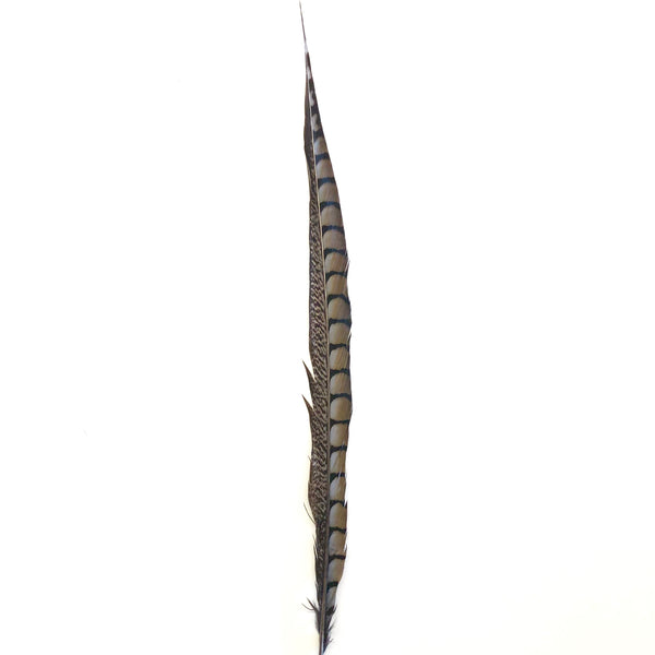 "20"" to 30"" Lady Amherst Pheasant Side Tail Feather - Grey"