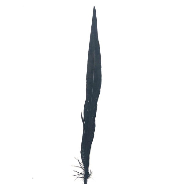 "30"" to 32"" Reeves Pheasant Tail Feather - Black"