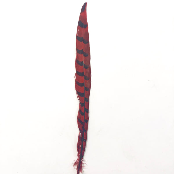 "30"" to 32"" Reeves Pheasant Tail Feather - Red ((SECONDS))"