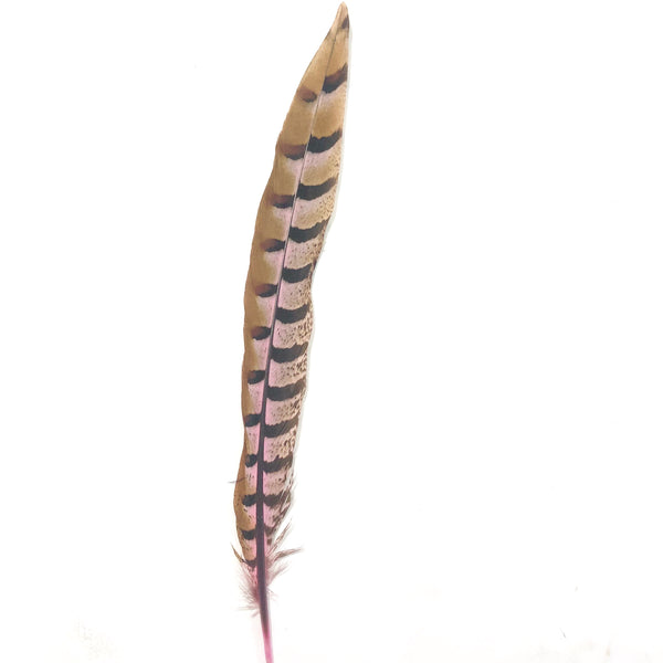 "12"" to 14"" Reeves Pheasant Tail Feather - Pink ((SECONDS))"