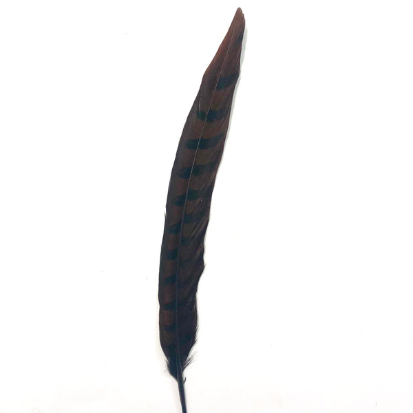 "12"" to 14"" Reeves Pheasant Tail Feather - Chocolate Brown"