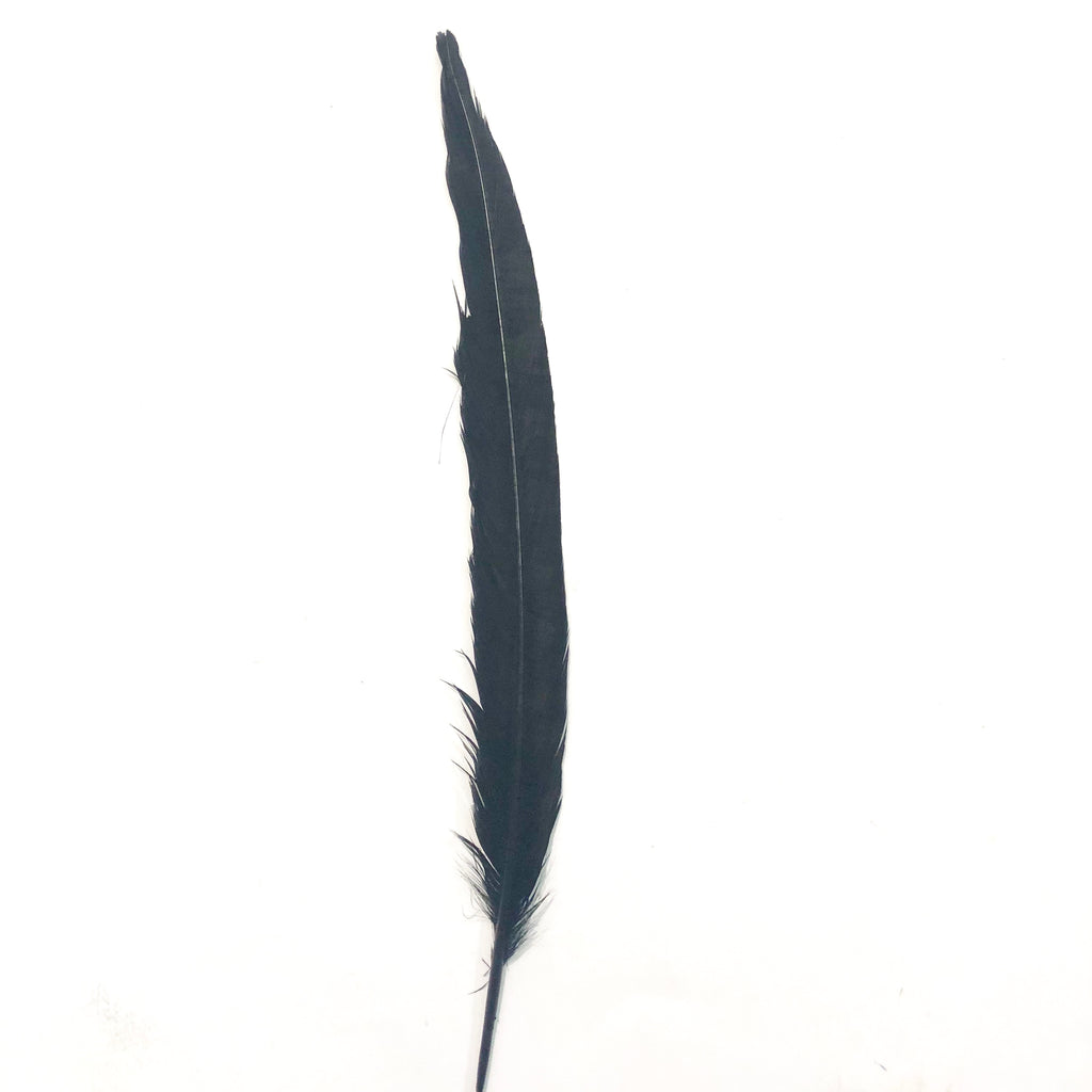 "8"" to 10"" Reeves Pheasant Tail Feather - Black"