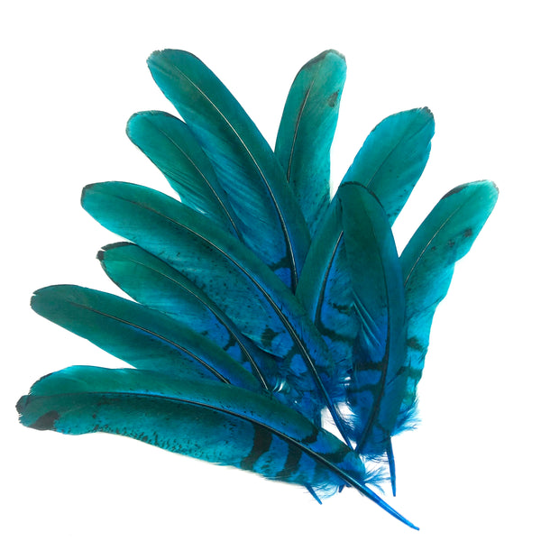 "Under 6"" Reeves Pheasant Tail Feather x 10 pcs - Turquoise"
