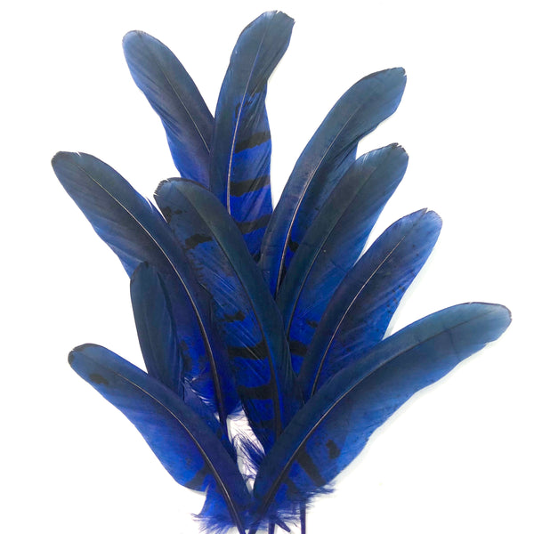 "Under 6"" Reeves Pheasant Tail Feather x 10 pcs - Royal Blue"