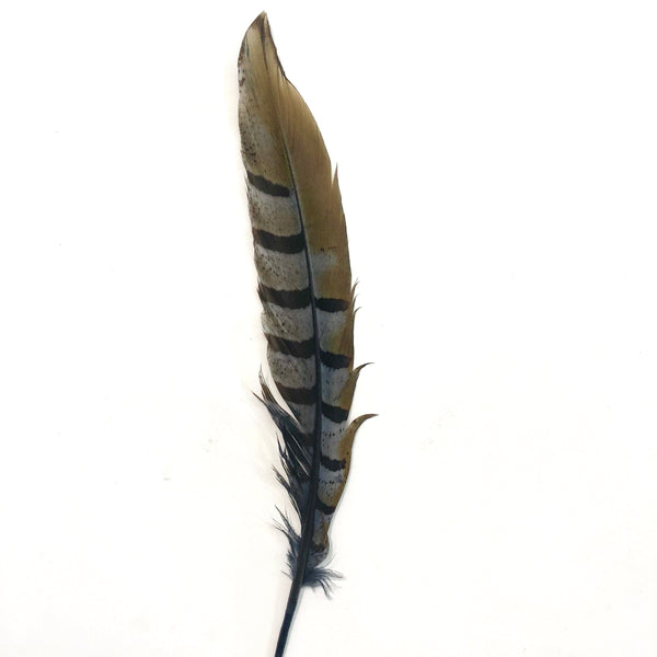 "8"" to 10"" Reeves Pheasant Tail Feather - Grey"