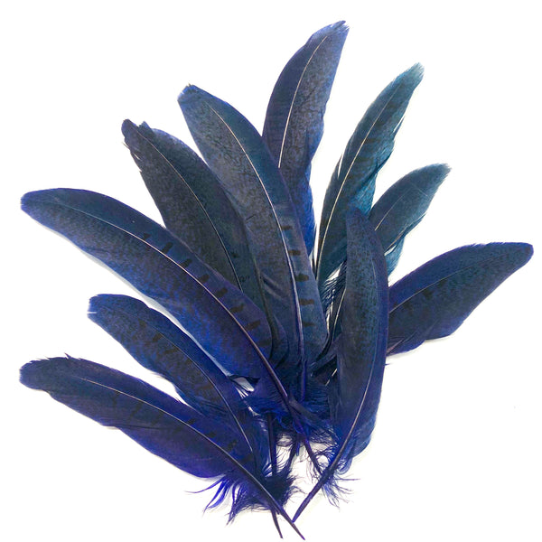 "Under 6"" Ringneck Pheasant Tail Feather x 10 pcs - Royal Blue"