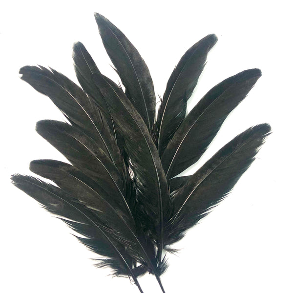 "Under 6"" Ringneck Pheasant Tail Feather x 10 pcs - Black"