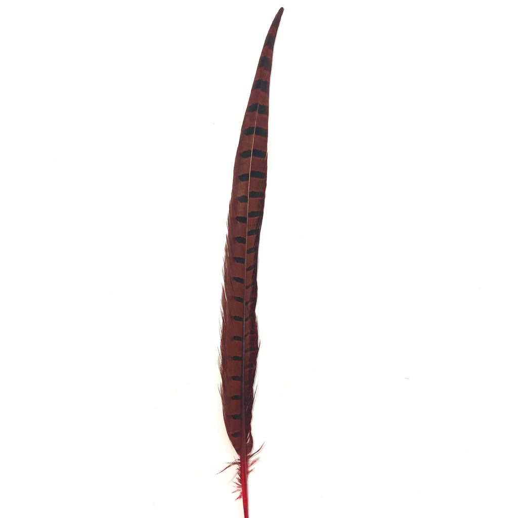 "10"" to 20"" Ringneck Pheasant Tail Feather - Red"