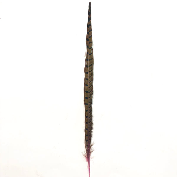 "10"" to 20"" Ringneck Pheasant Tail Feather - Pink"
