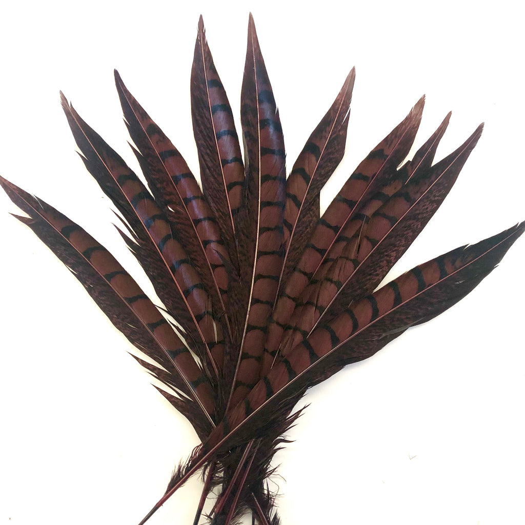 "5"" to 10"" Lady Amherst Pheasant Side Tail Feather x 10 pcs - Chocolate"