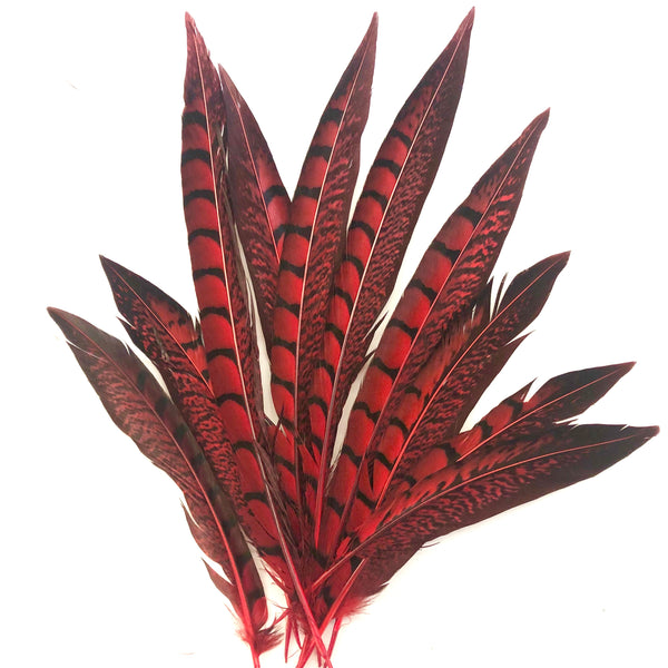 "5"" to 10"" Lady Amherst Pheasant Side Tail Feather x 10 pcs - Red"