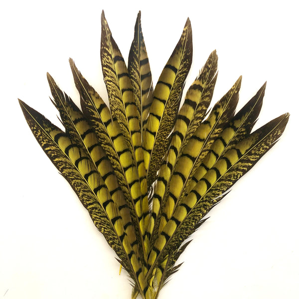 "5"" to 10"" Lady Amherst Pheasant Side Tail Feather x 10 pcs - Yellow"