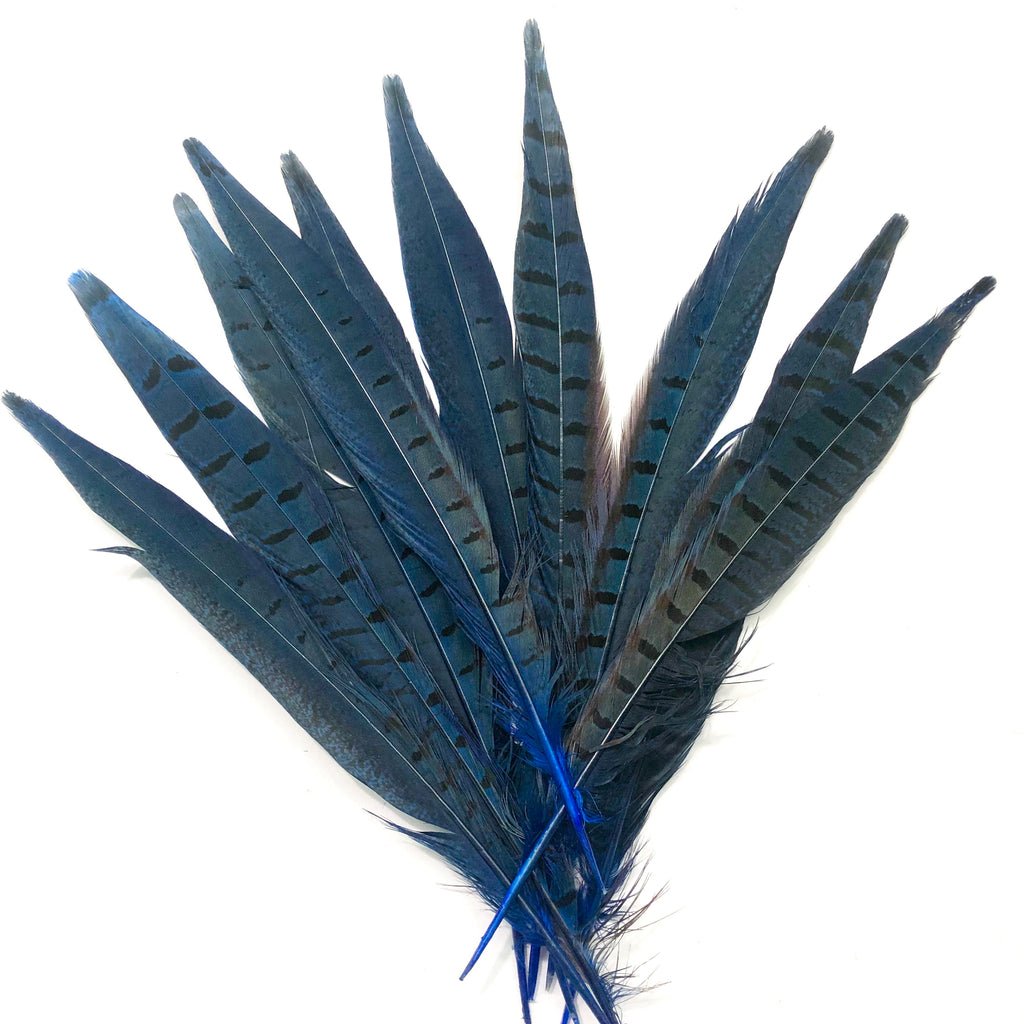 "6"" to 10"" Ringneck Pheasant Tail Feather x 10 pcs - Royal Blue"