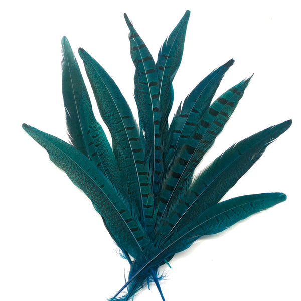 "6"" to 10"" Ringneck Pheasant Tail Feather x 10 pcs - Turquoise"