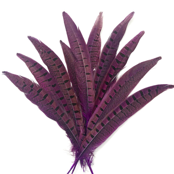 "6"" to 10"" Ringneck Pheasant Tail Feather x 10 pcs - Eggplant"