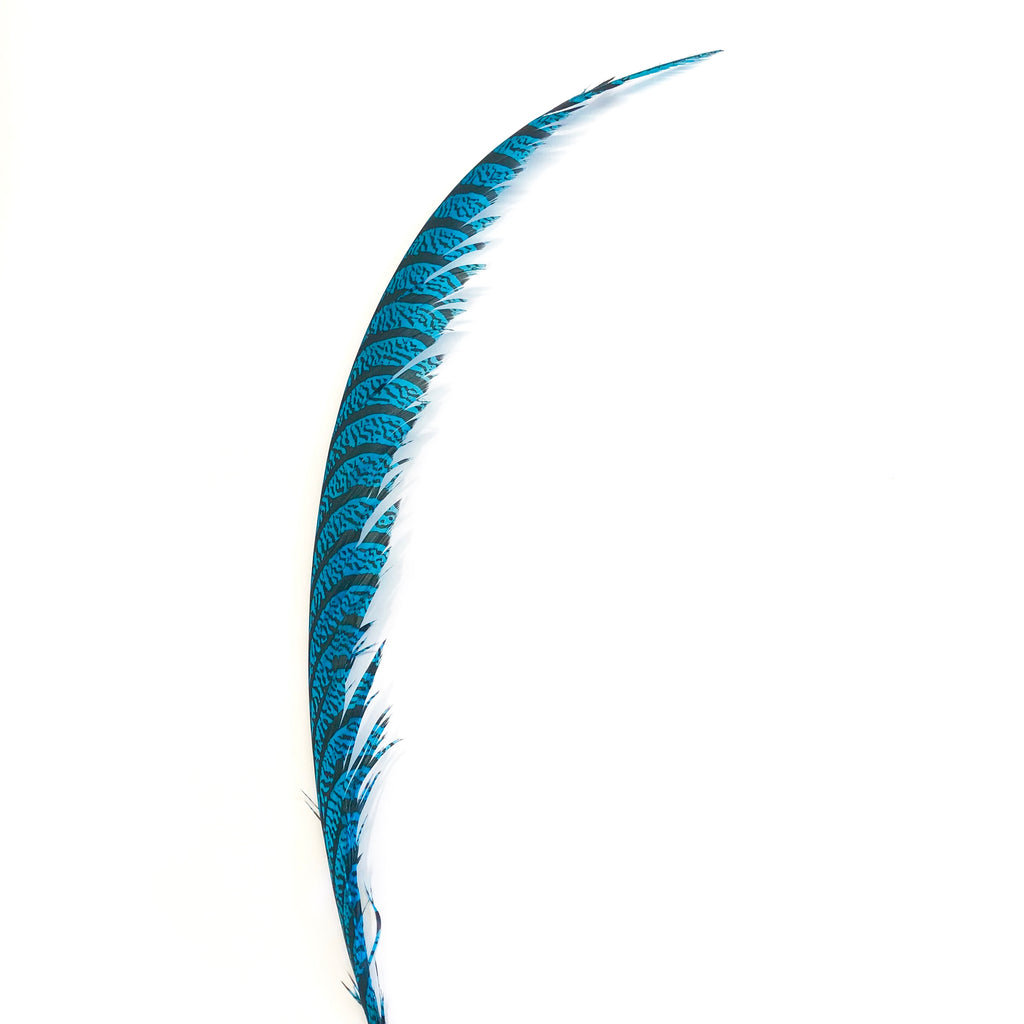 Lady Amherst Pheasant Centre Tail Feather - Turquoise