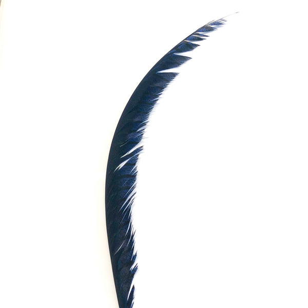 Lady Amherst Pheasant Centre Tail Feather - Navy Blue ((SECONDS))