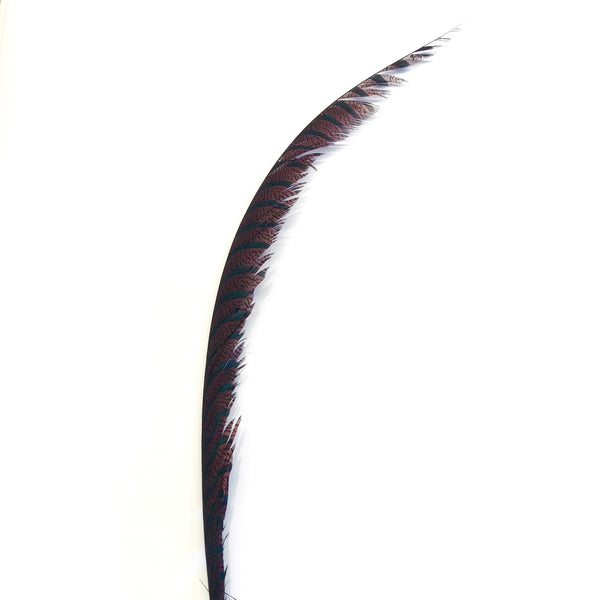 Lady Amherst Pheasant Centre Tail Feather - Chocolate ((SECONDS))