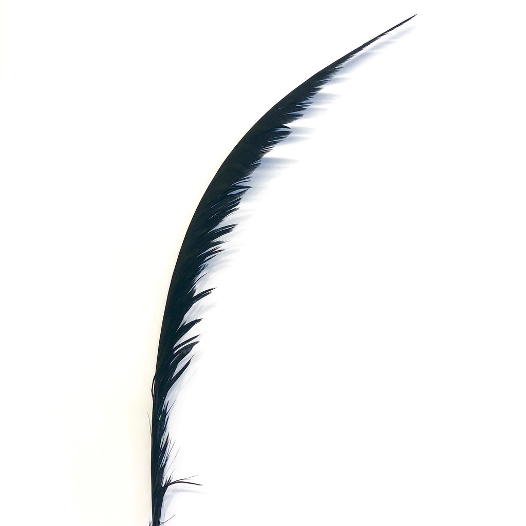 Lady Amherst Pheasant Centre Tail Feather - Black ((SECONDS))