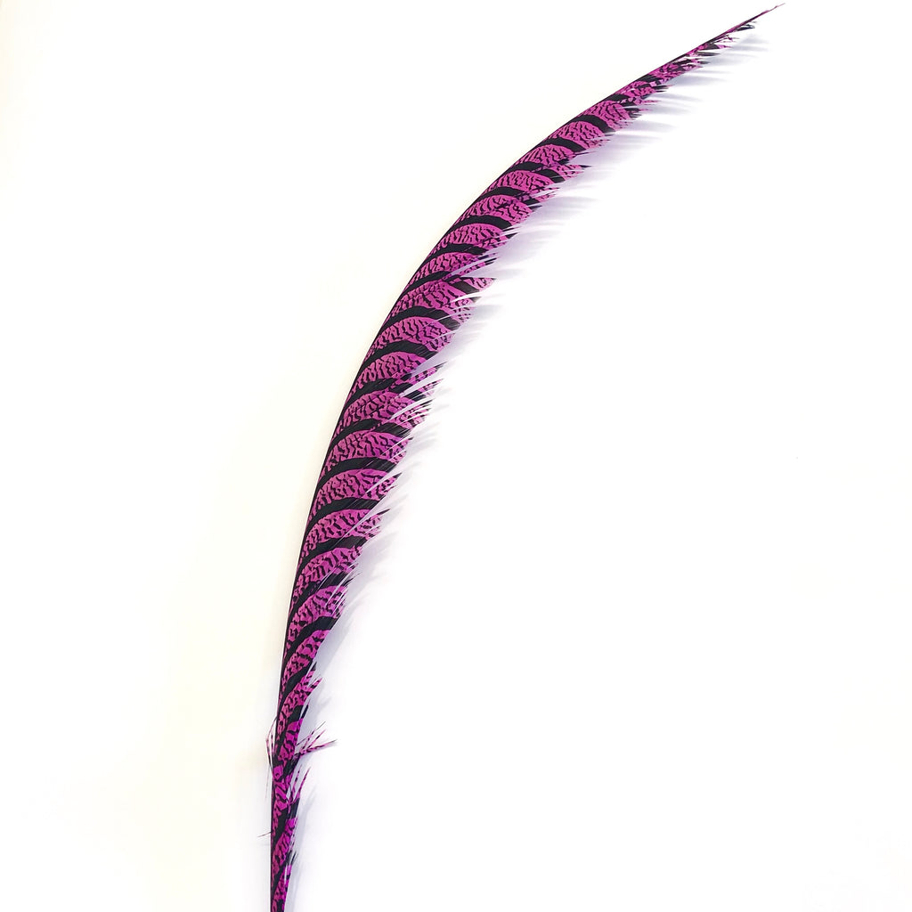 Lady Amherst Pheasant Centre Tail Feather - Hot Pink ((SECONDS))
