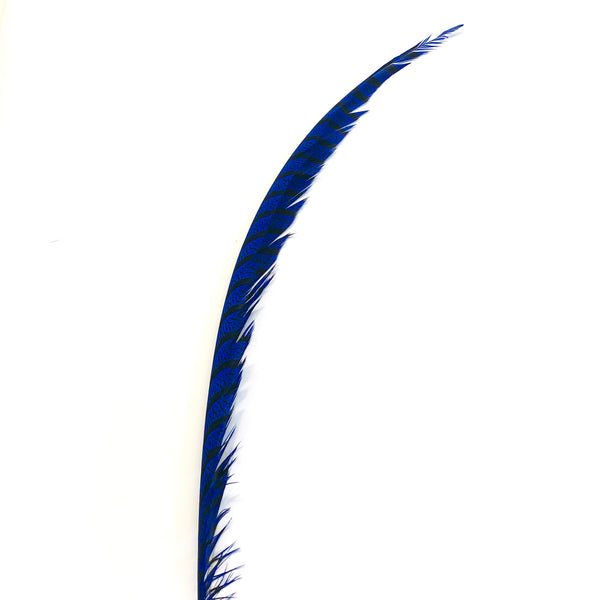 Lady Amherst Pheasant Centre Tail Feather - Royal Blue ((SECONDS))
