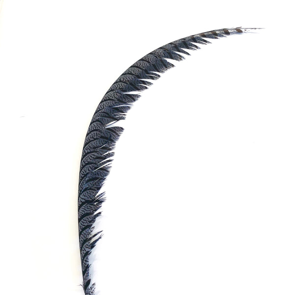 Lady Amherst Pheasant Centre Tail Feather - Grey ((SECONDS))