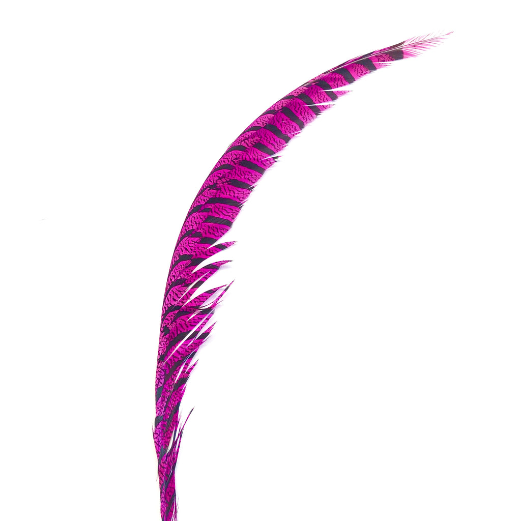 Lady Amherst Pheasant Centre Tail Feather - Cerise