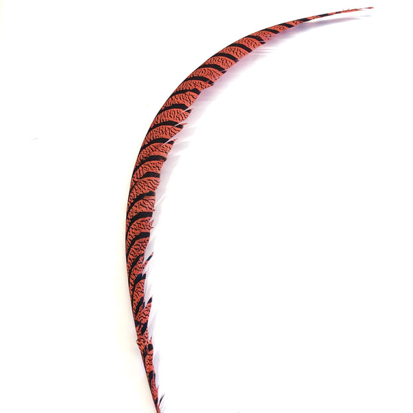 Lady Amherst Pheasant Centre Tail Feather - Dusty Pink ((SECONDS))
