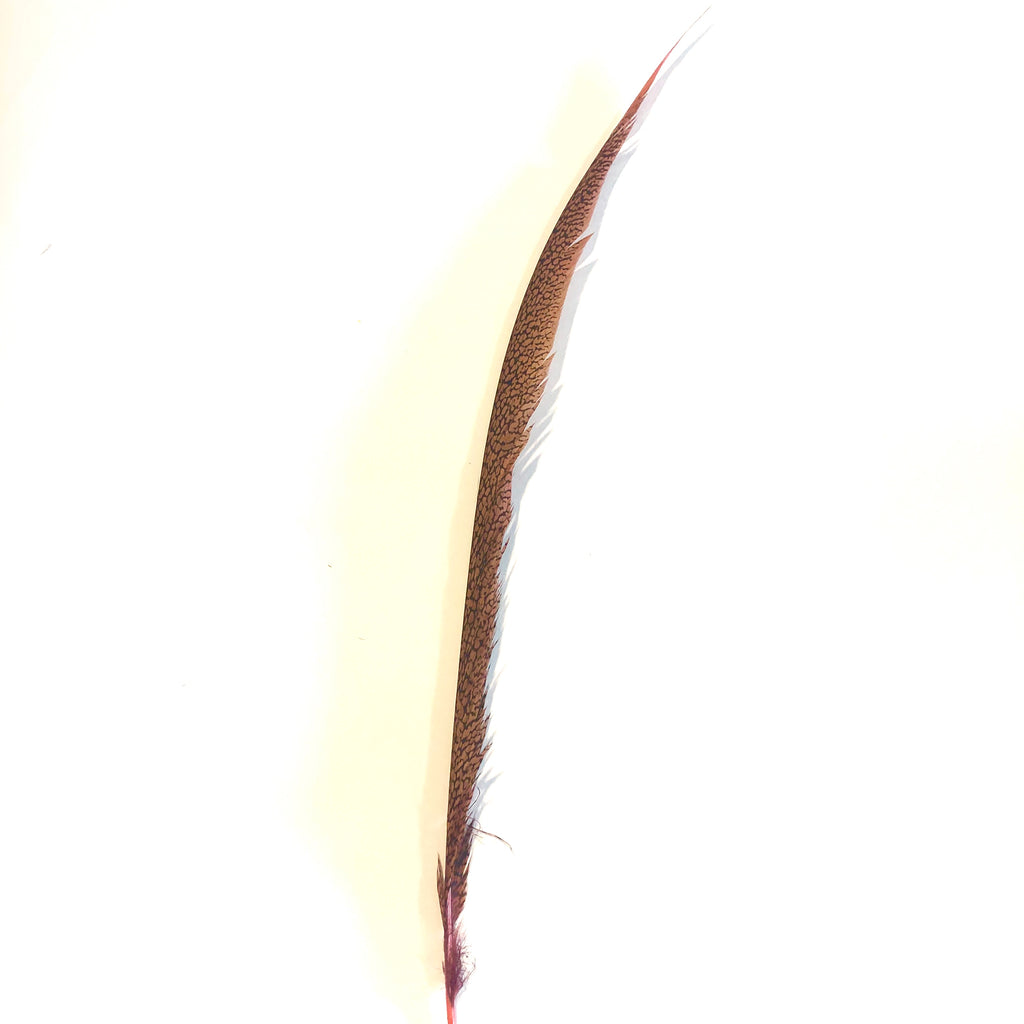 Golden Pheasant Centre Tail Feather - Dusty Pink ((SECONDS))