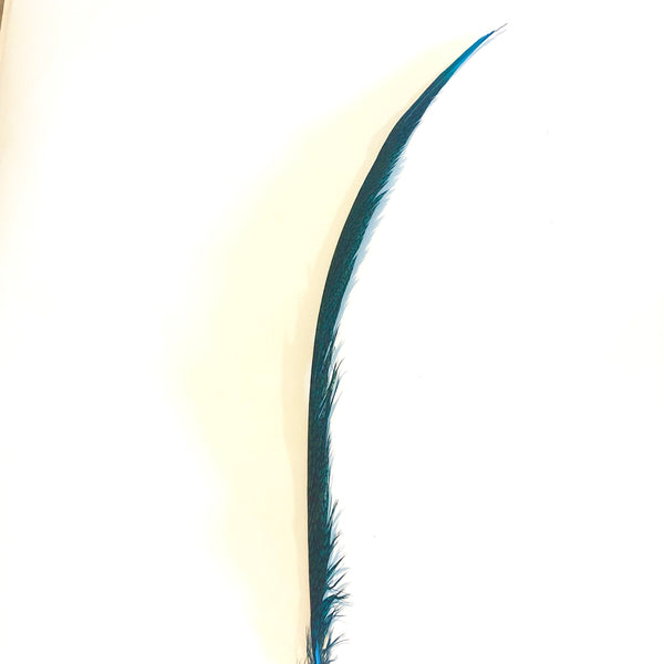 Golden Pheasant Centre Tail Feather - Turquoise ((SECONDS))