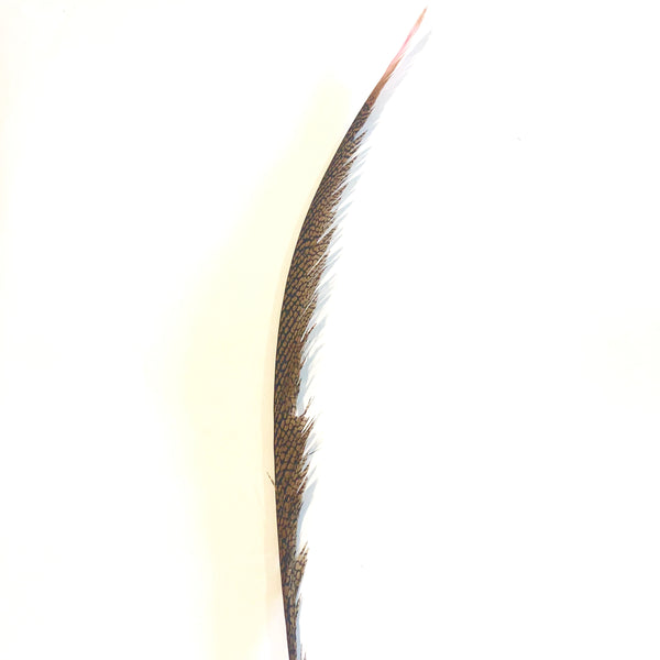 Golden Pheasant Centre Tail Feather - Pink ((SECONDS))
