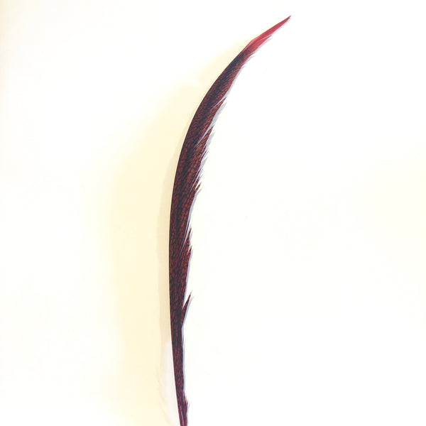 Golden Pheasant Centre Tail Feather - Red ((SECONDS))