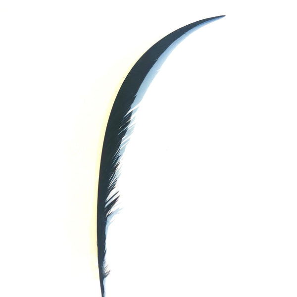 Golden Pheasant Centre Tail Feather - Black ((SECONDS))