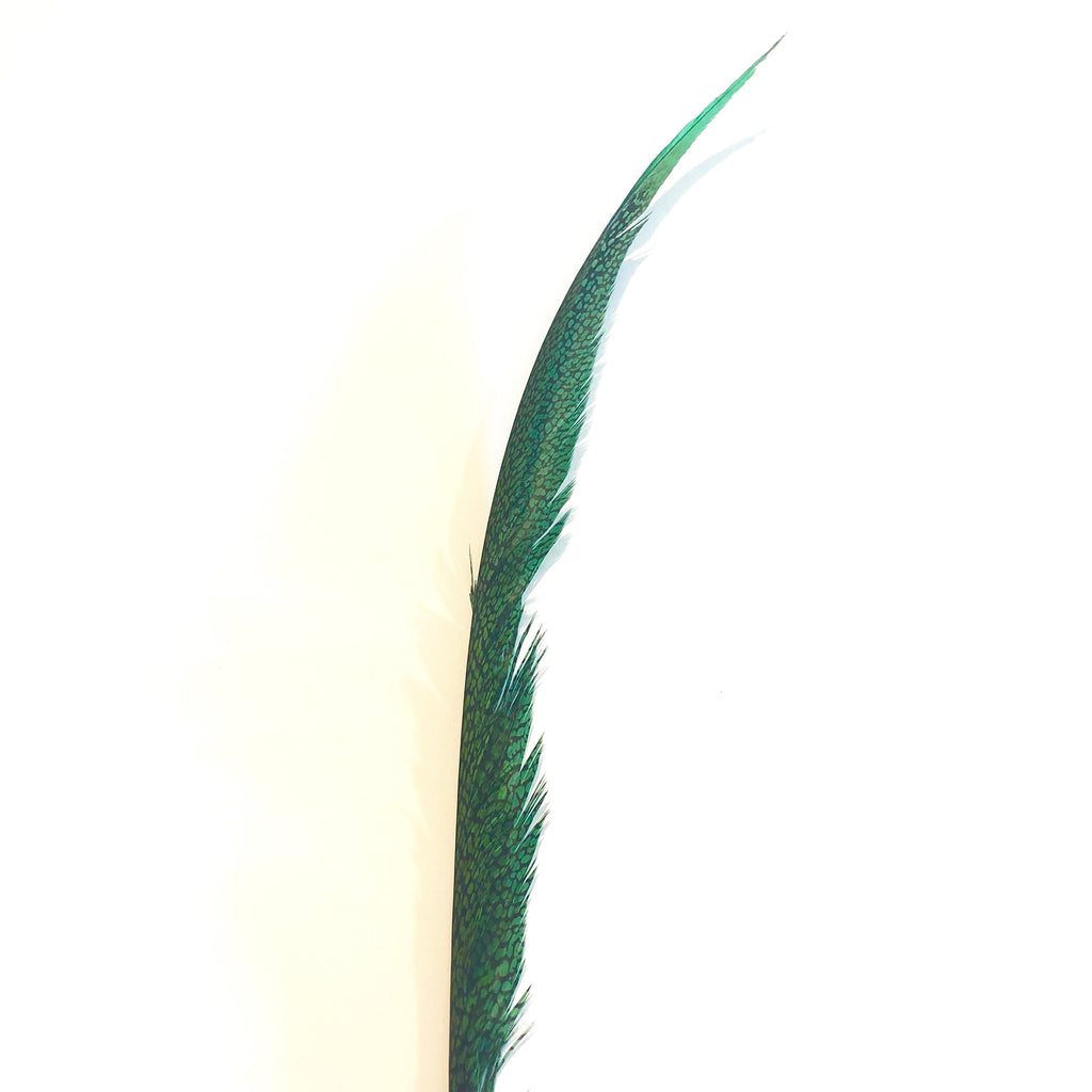 Golden Pheasant Centre Tail Feather - Green