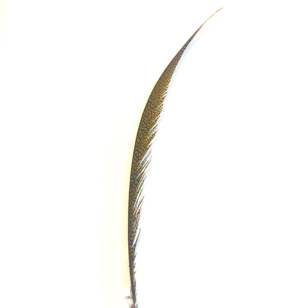 Golden Pheasant Centre Tail Feather Olive Green SECONDS