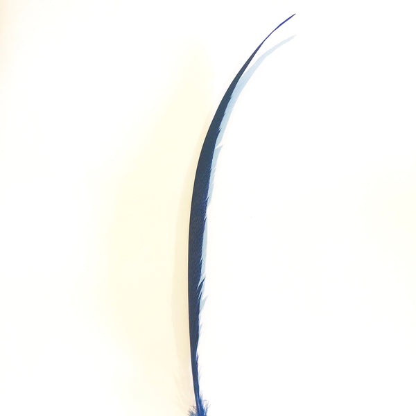 Golden Pheasant Centre Tail Feather - Royal Blue ((SECONDS))