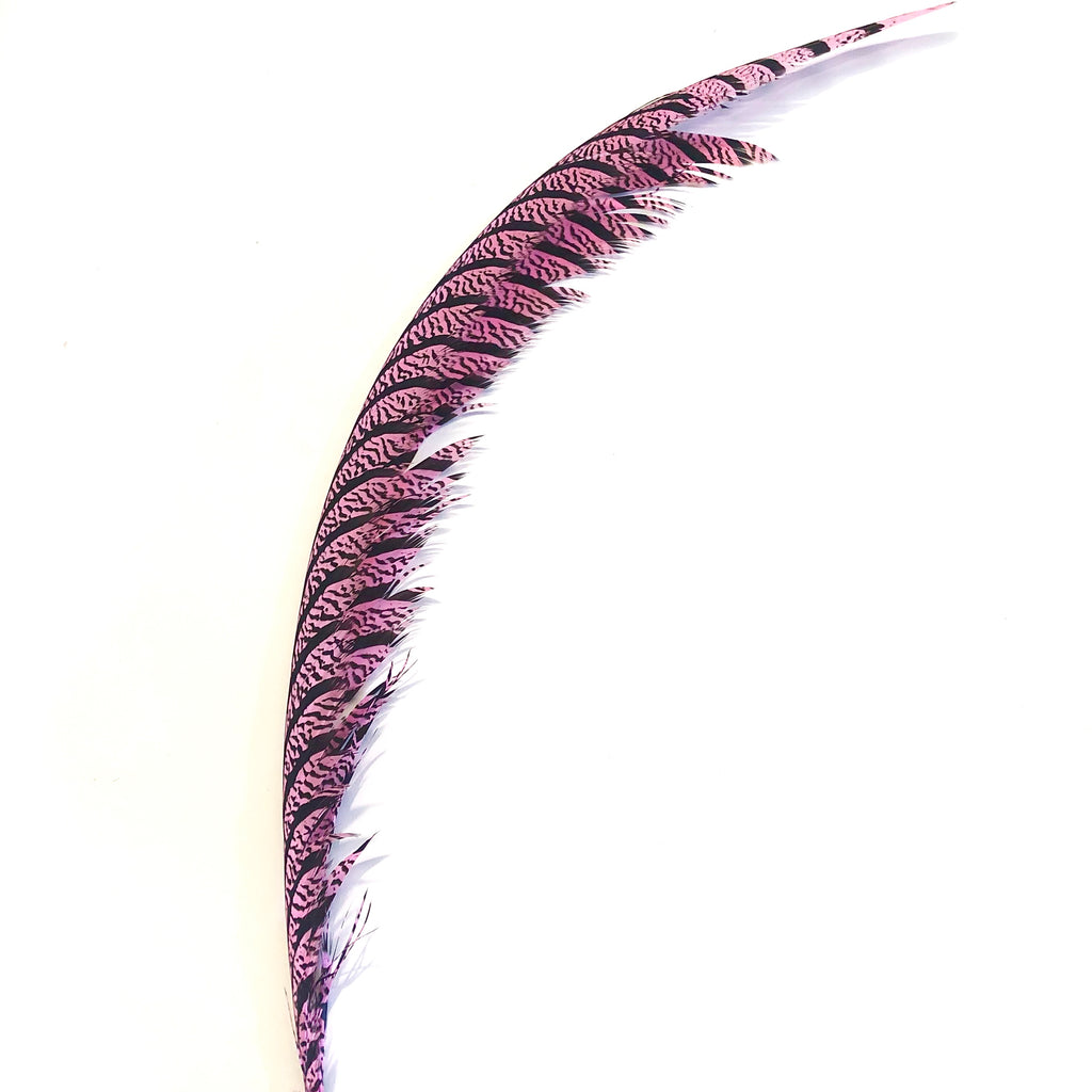 Lady Amherst Pheasant Centre Tail Feather - Pink ((SECONDS))