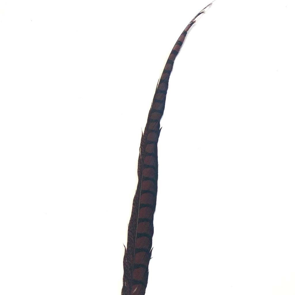 "30"" to 38"" Lady Amherst Pheasant Side Tail Feather - Chocolate Brown ((SECONDS))"