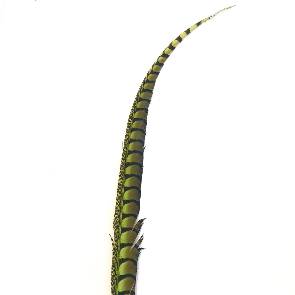"30"" to 38"" Lady Amherst Pheasant Side Tail Feather - Lime Green"