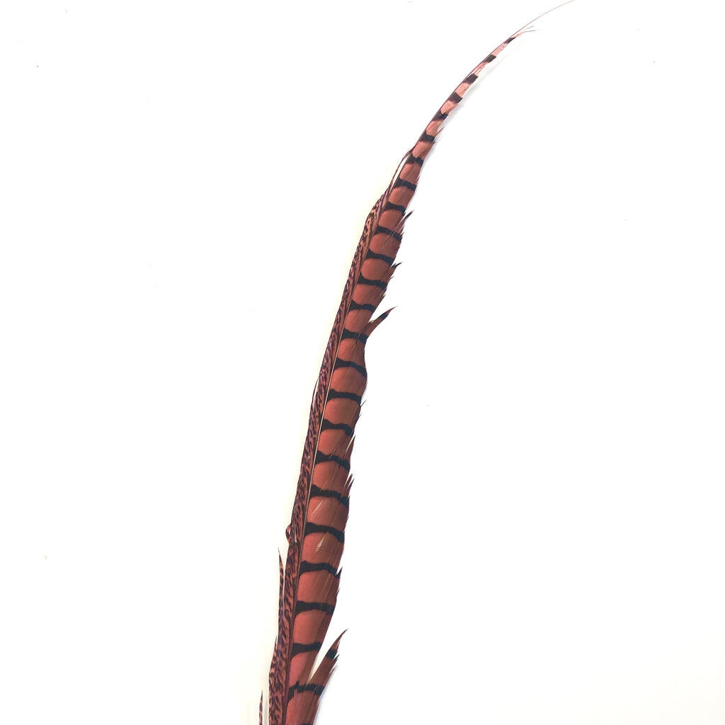 "30"" to 38"" Lady Amherst Pheasant Side Tail Feather - Dusty Pink ((SECONDS))"