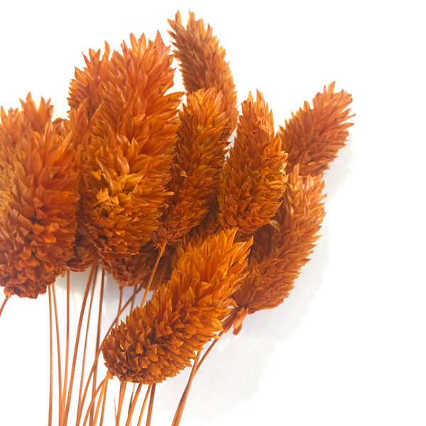 Natural Dried Phalaris Grass Flower Stem Bunch - Burnt Orange